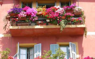 Цветы на балконе: от солнечной до теневой стороны
