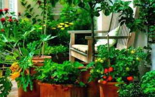 Огород на балконе своими руками: от огурцов до клубники