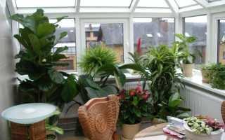 Зимний сад на балконе и лоджии: продумываем все