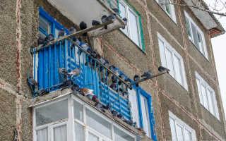 Как избавиться от голубей на балконе: методы