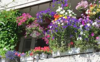 Балконные ящики для цветов и металлические держатели