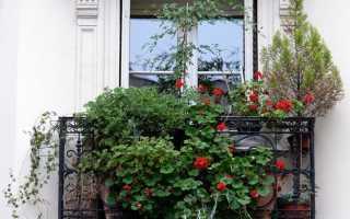 Озеленение балкона: советы от профи