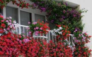 Какие цветы посадить на балконе: наименования растений