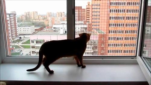 1. Сетка на окна антикошка