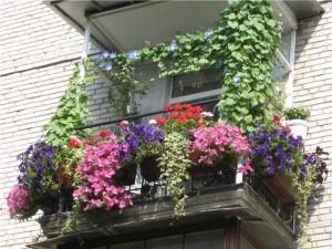 выбор цветов